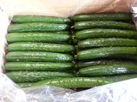 nohohon_Diect_Cucumber