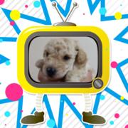 pd_puppy