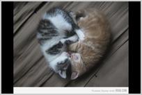 cat_heart