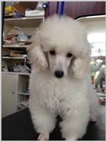 eader's_puppy2
