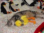 cat&toy