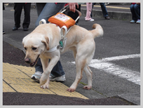 a_guide_dog